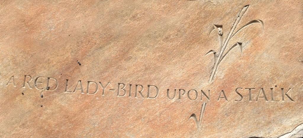 Red Lady bird
